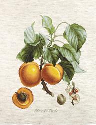 Borduurpakket Abricot-Peche - Luca-S