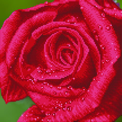 Diamond Dotz Rose Dew - Needleart World