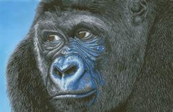 Diamond Dotz Kibali Western Lowland Gorilla - Needleart World