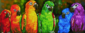 Diamond Dotz Rainbow Parrots - Needleart World